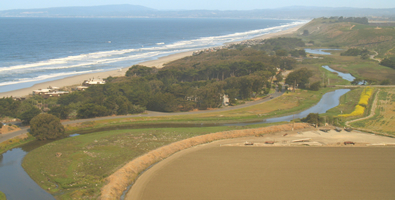 A seasonal pond that supports the only known CA RLF breeding habitat in the Watsonville Slough System