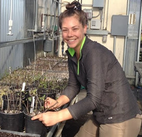 Taryn Dunivant inspecting native shrub cuttings in our native plant nursery