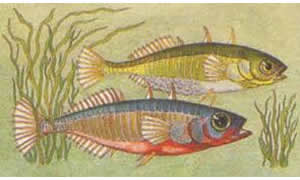 Native Fish